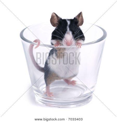 Vidrio de... Ratón