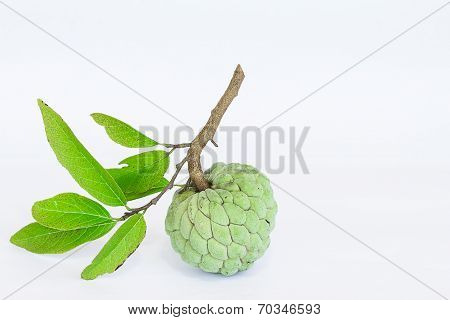 Sugar Apples Or Annona Squamosa Linn On White Background