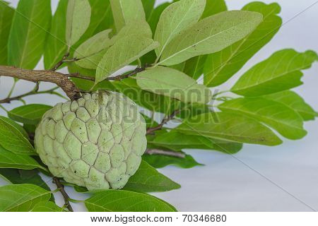 Custard Apples Or Sugar Apples