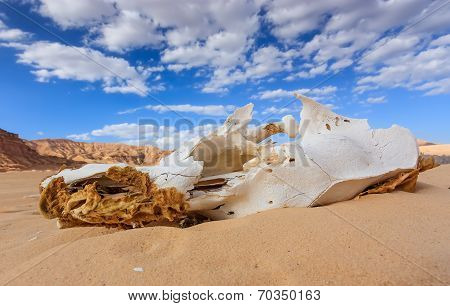 Camel Skull In The Desert
