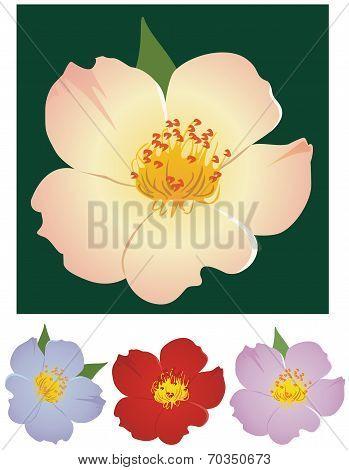 Simplex rose