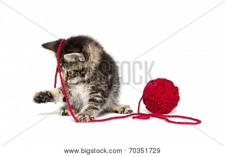 Tabby Kitten With Yarn