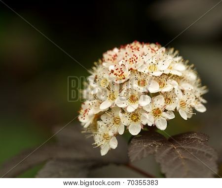 Isolated Closeup Wihte Flower