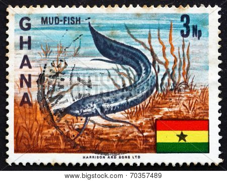Postage Stamp Ghana 1967 West African Lungfish