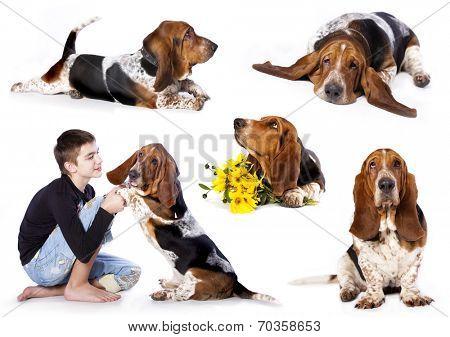 Basset hound and boy