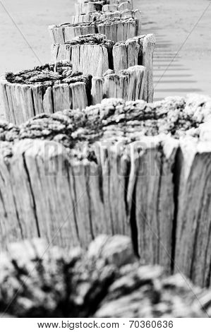 Timber Groynes On The Beach  At The North Sea