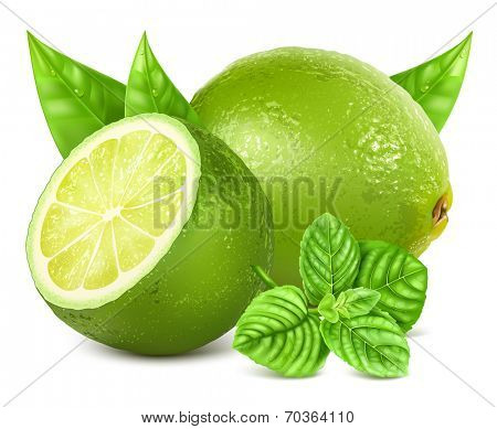 Fresh limes with leaves and mint. Vector illustration.