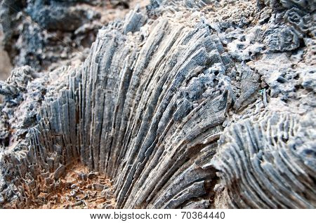 Weathered coastal rock formation showing resistant coral formations and mineral strata in a pattern or ridges