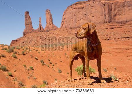 Red Dog In Desert