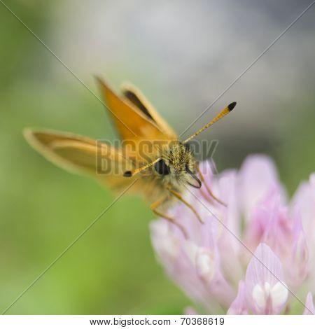 Butterfly Antennae