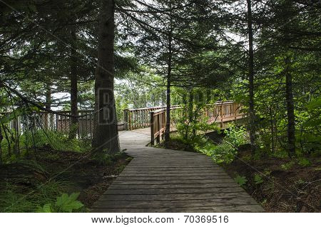 Deep Woods Boardwalk