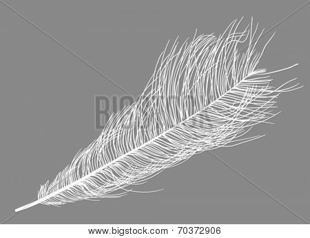 illustration with ostrich feather silhouette isolated on grey background