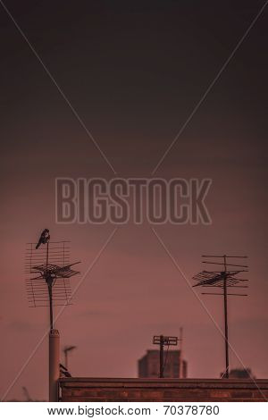 Bird on the antenna