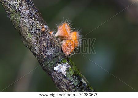 Fungi Mushroom  Macro On Tree
