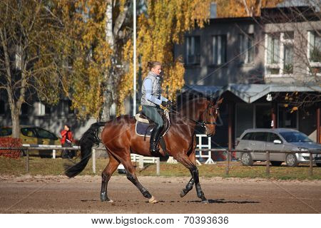 Young Woman Galloping On Brown Horse