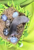 picture of ferrets  - Two weeks old cute ferret baby in the nest of hay with decorations - JPG