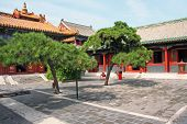 foto of lamas  - Courtyard of Lama temple in Beijing China with beautiful artificially shaped pines - JPG