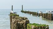 stock photo of albatross  - Timber groynes on the beach at the north sea Holland - JPG