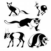 picture of jackal  - Vector original art animal silhouettes collection for design 6 - JPG