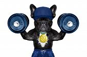 image of medal  - dog as personal trainer with gold medal lifting heavy dumbbells wearing sport shorts - JPG