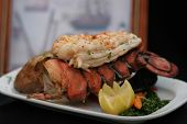 pic of lobster tail  - Lobster Tails - JPG
