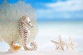 stock photo of seahorses  - seahorse with white starfish on white sand beach - JPG