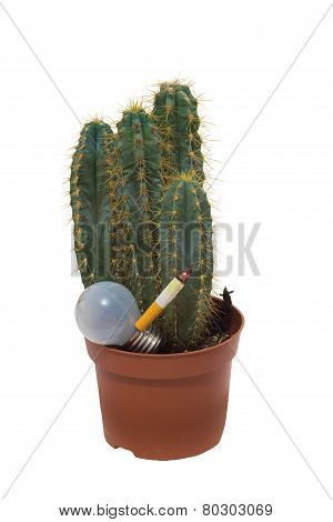 Cactus and lamp with a cigarette