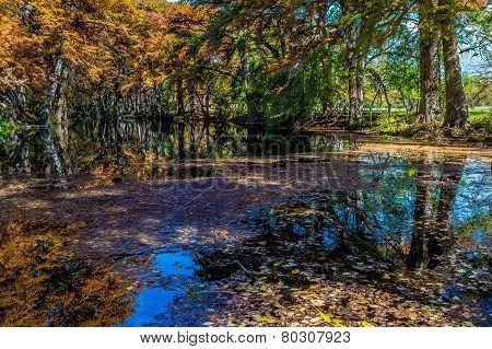 Beautiful Fall Foliage On The Frio River, Texas.
