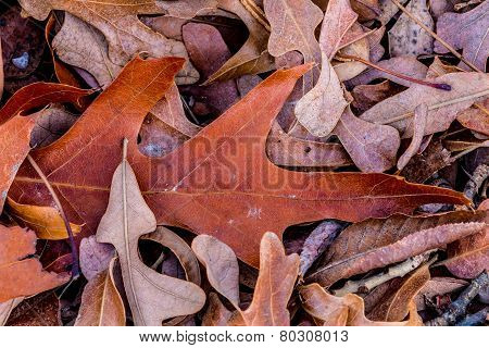 Closeup Of Beautiful Intricate Fall Foliage.