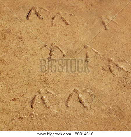 Traces Of Birds In The Wet Sand On The Shore