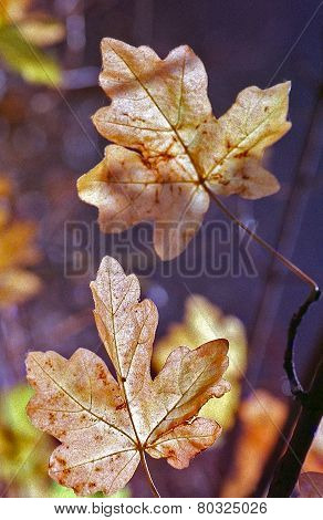 Autumn leaves on film camera