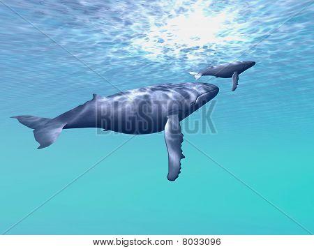 Whale Company
