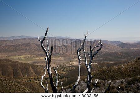 Dead Twigs Frame Anza Borrego State Park