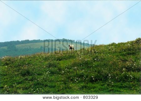 horse on mountain