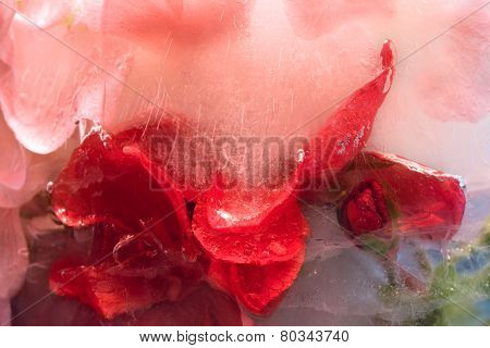 Frozen   Flower Of   Geranium