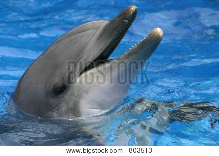 Playful Bottle Nosed Dolphin