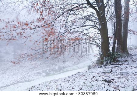 Blurred Beech In Winter Mountains
