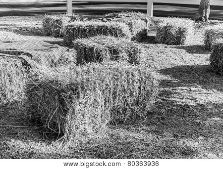 Hay Bale On The Ground
