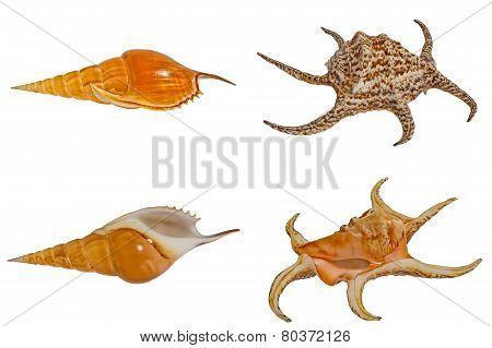 Sea Shells Set.