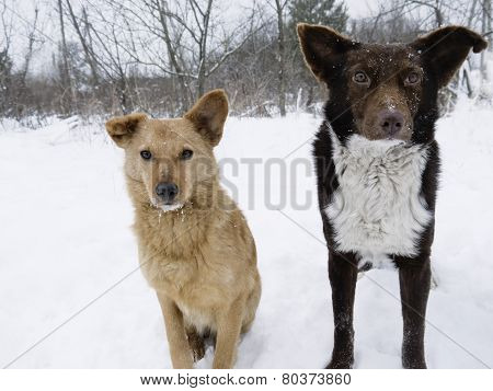 Couple Of Hungry Dogs