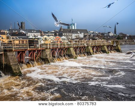 Seagulls Over River ,athlone Dam In Background