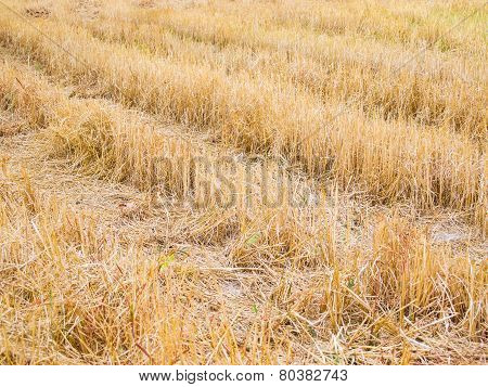 The Field After The Harvest.