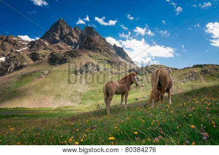 Wild Horses In The Mountains