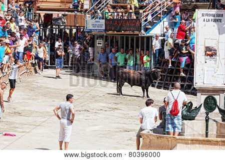 Festival of bulls and horses in Segorbe
