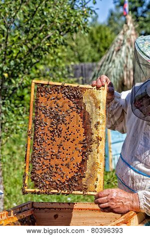 Frame with honeycombs with honey