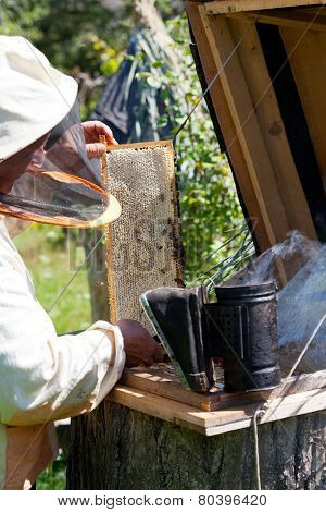 Bee-keeper smokes bees from a beehive a smoke by means of bee smoker