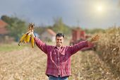 picture of harvest  - Young farmer holding corncobs in raised arms on the corn field during harvest - JPG