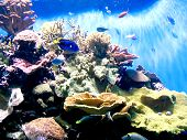 stock photo of coral reefs  - Underwater coral fish photo