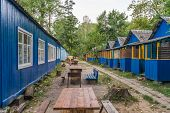 picture of camo  - many blue bungalow in a ukrainian camo in the forest - JPG