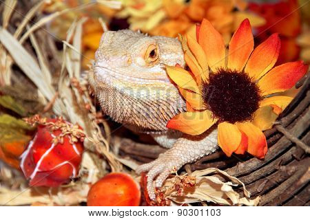 Festive Bearded Dragon